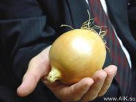 Урожай лука на капельном поливе  от 90 тонн/га