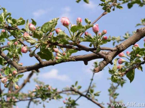 Сад весной